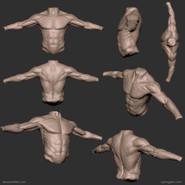 Анатомия для скульпторов ,художников. | moldear | Pinterest ...