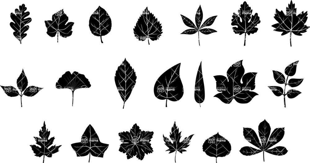 Vector Silhouettes Mega Bundle Vector Leaf Silhouettes Set Graphicmama Leaf Silhouette Leaves Vector Vector