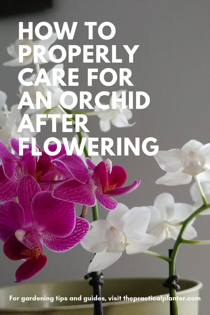 Orchids For Sale Tesco Orchids Orchid Care After Flowering Orchids Orchid Care