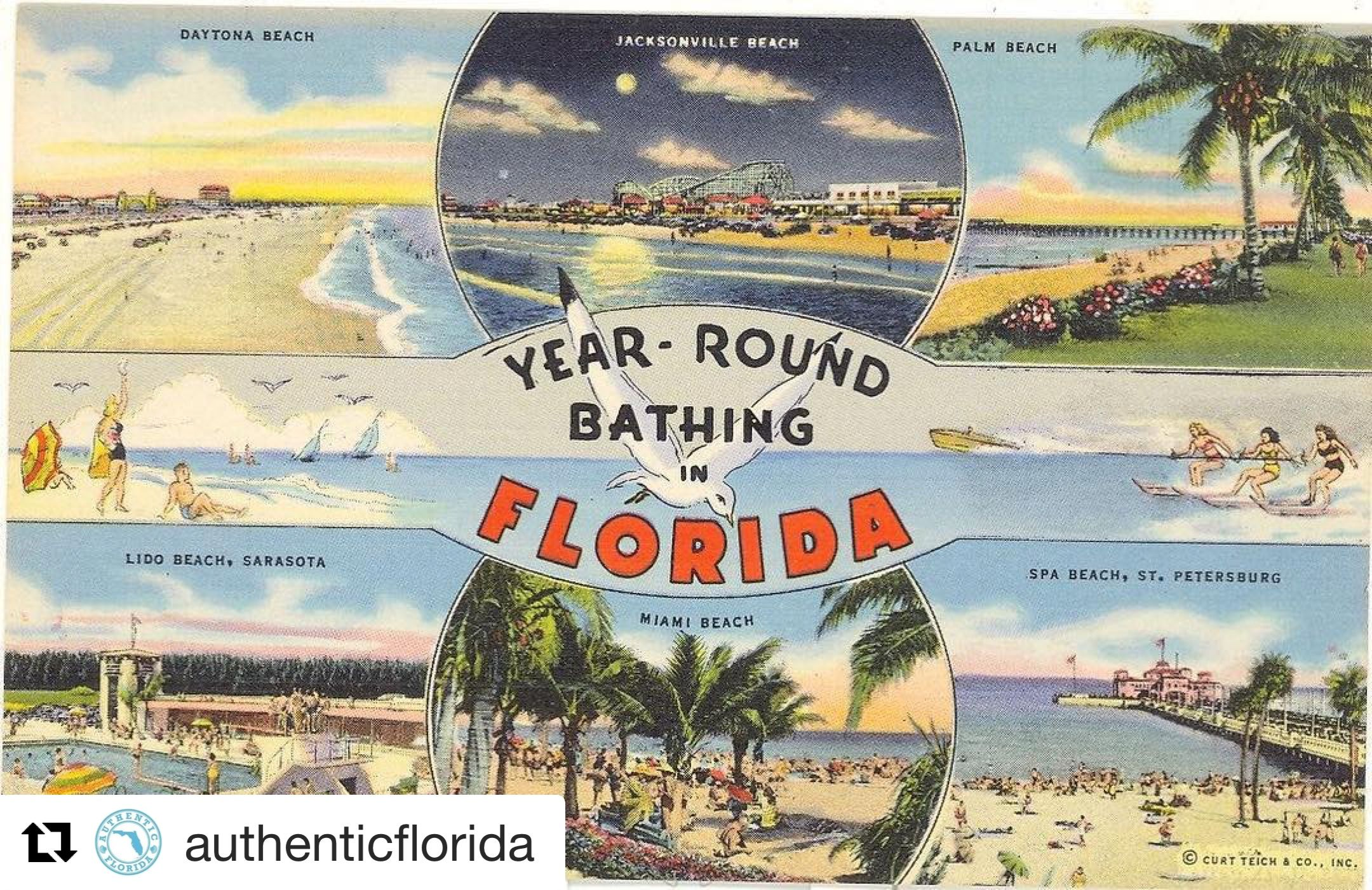 Pin By Allthingsflorida On Misc Florida Vintage Florida Postcard Vintage Postcard
