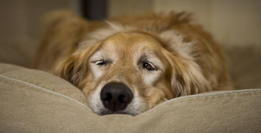 Usa Charleston Sc Woodlands Inn Luxury Pet Friendly Hotel