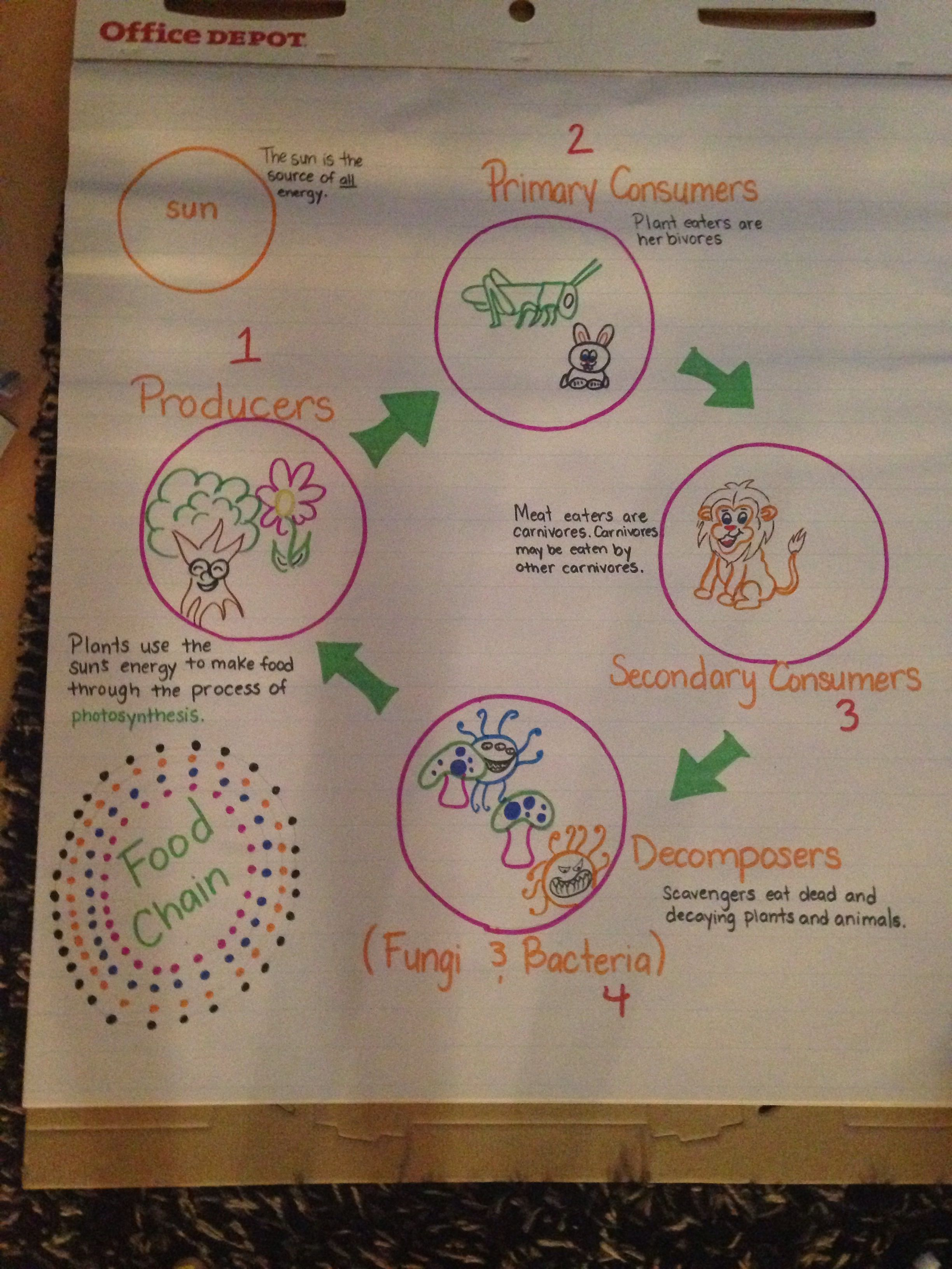 Food Chain 4th Grade Science Anchor Charts Fourth