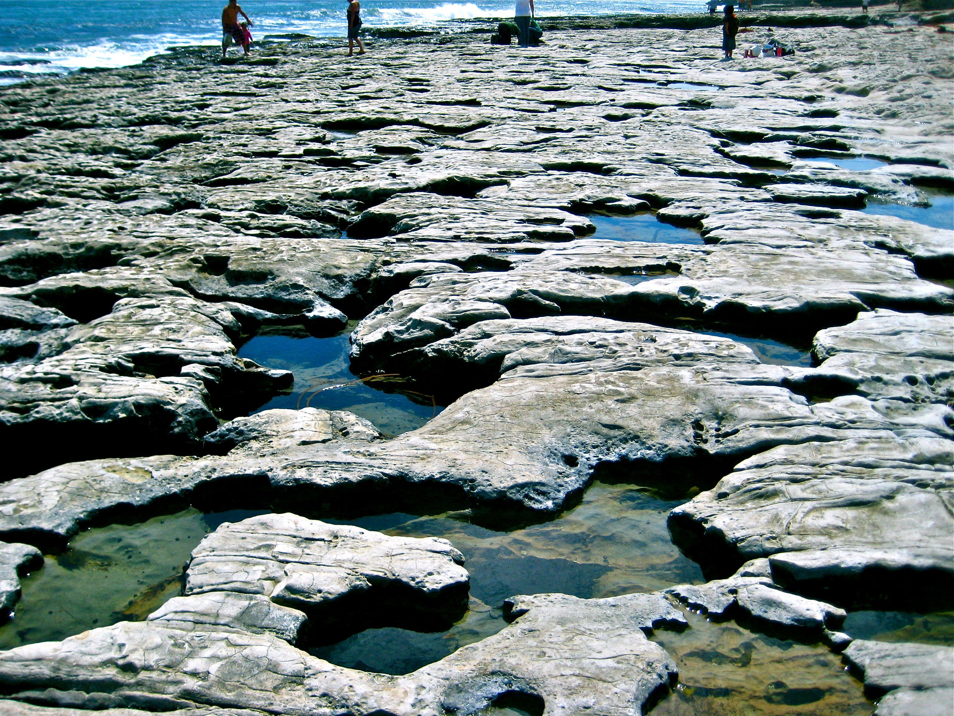 Natural Bridges Tide Pools Santa Cruz Ca Places To Travel Natural Bridge Tide Pools