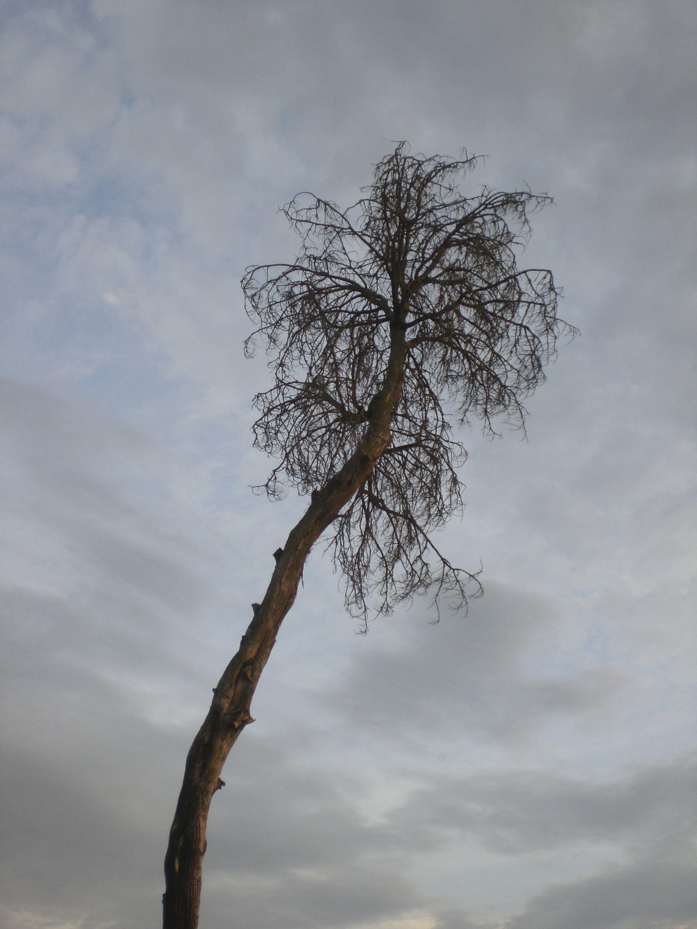 Árbol sobre cielo nublado