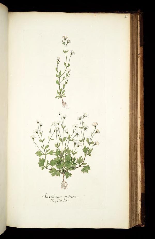 1781-93 - v.1 - Icones plantarum rariorum - edited by Nicolao Josepho Jacquin.