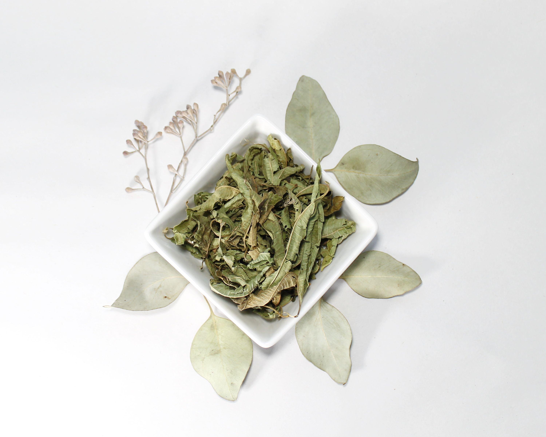 Organics Lemon Verbena In 2020 Culinary Herbs Herbs Lemon Verbena