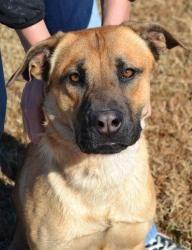 Adopt Bianca On Dogs Adoption Crate Training