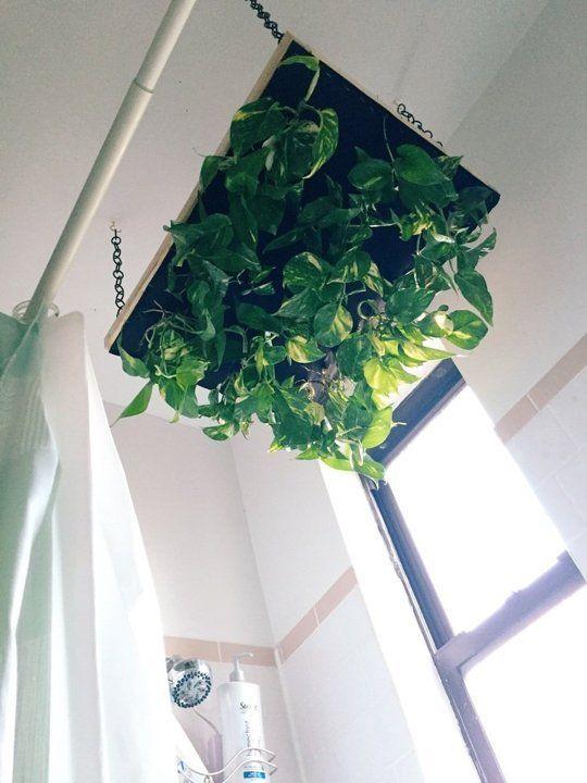 Diy Hanging Shower Planter Shower Plant Bathroom Plants