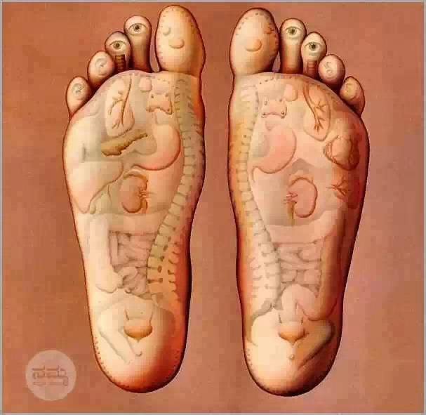 Stay on your feetor at least get a really good daily foot massage stay on your feetor at least get a really good daily foot massage internal organs have sensory touches at the bottom of your foot the nerves connected ccuart Image collections