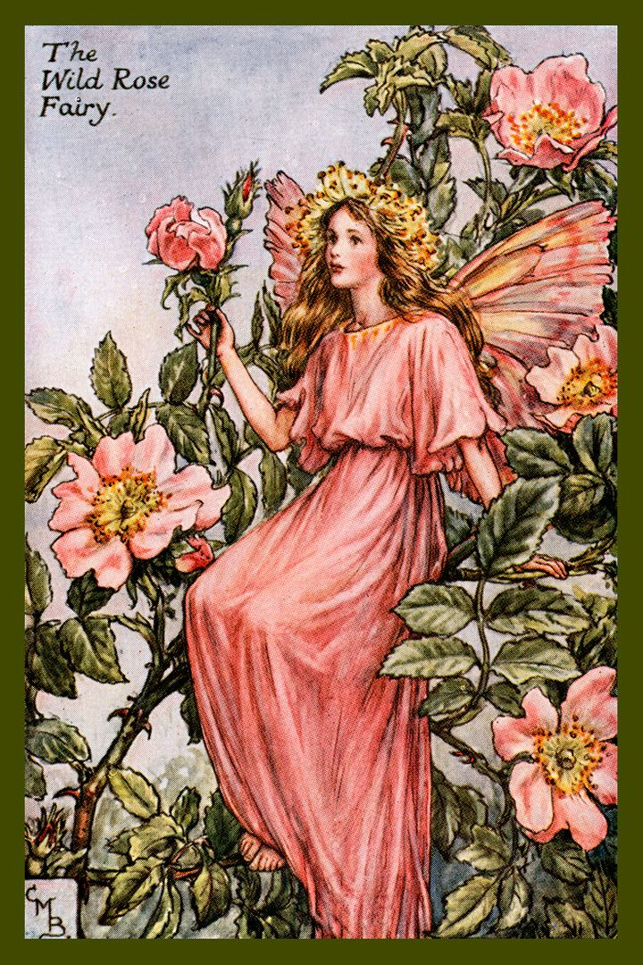 the wild rose fairy by cicely mary barker from the 1920s. Black Bedroom Furniture Sets. Home Design Ideas
