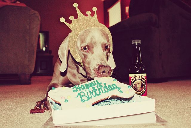 Happy Birthday to King Louie  Louie celebrated his 3rd birthday with a pizza party. The family came over and brought gifts, the humans had cupcakes and ice cream. Louie had a birthday cookie and frosty paws... we clearly don't have kids...