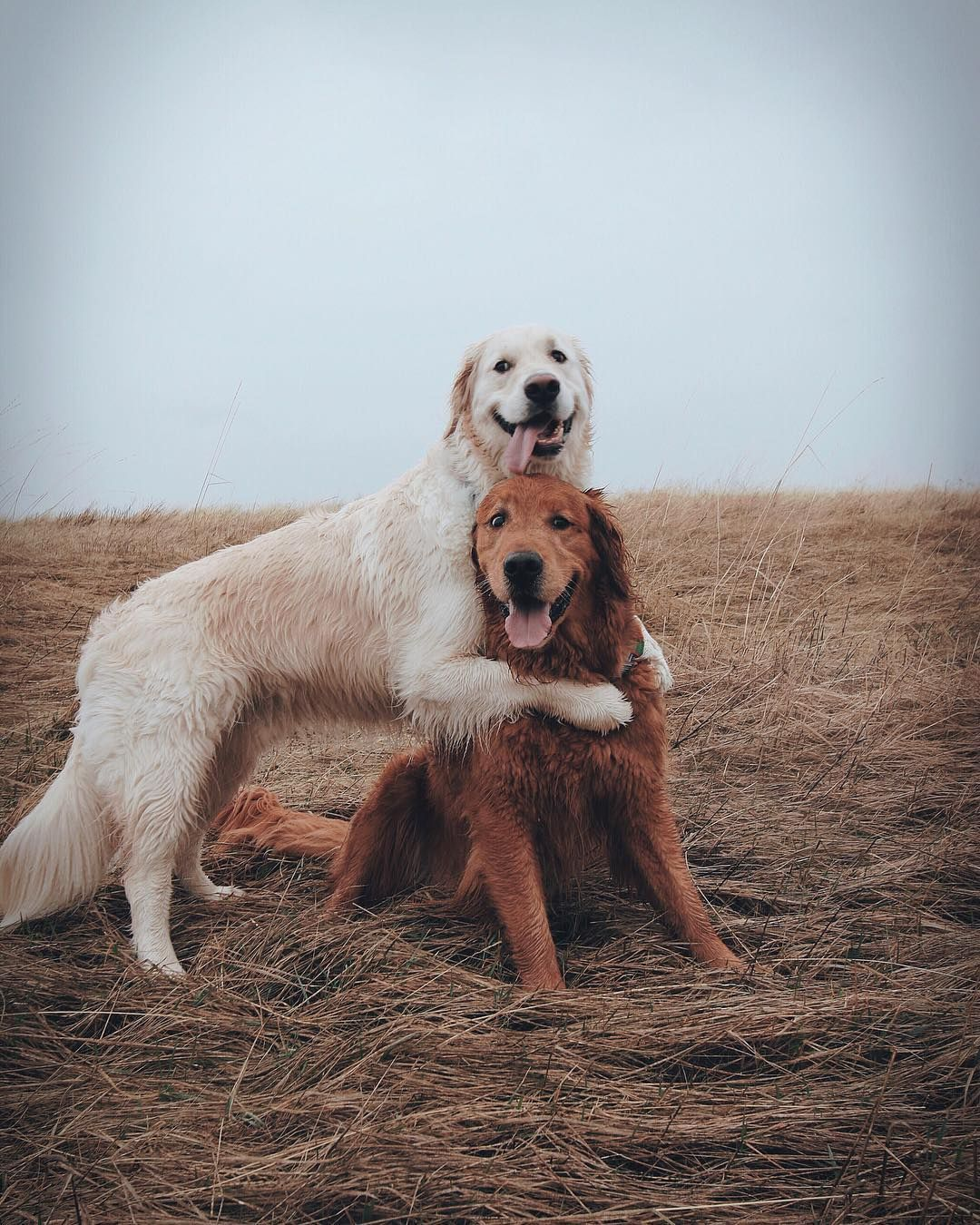 Pin By Jess On Everything Dogs Hugging Dog Photoshoot Dog