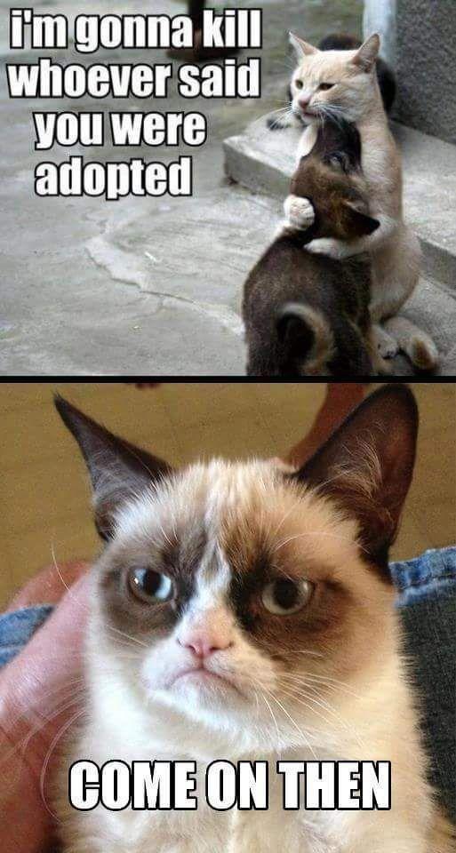 Grumpy Cat Image