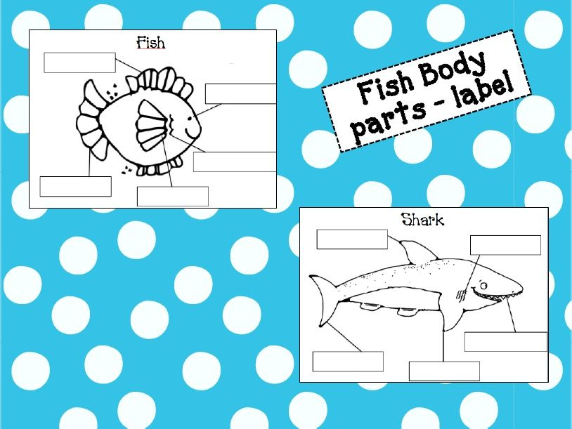 fish diagrams and labels fish ocean activities. Black Bedroom Furniture Sets. Home Design Ideas