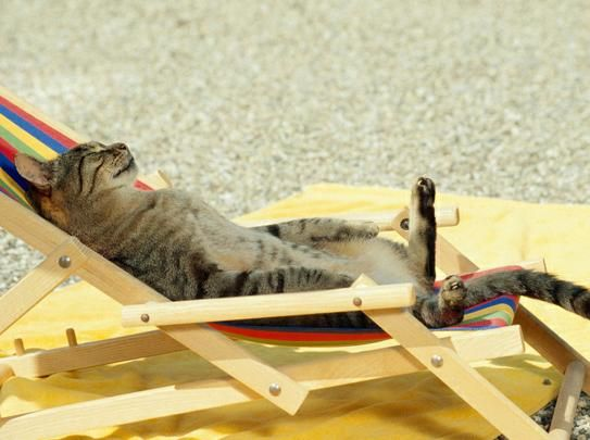 Cat on vacation