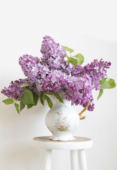 Lilac White Background Vase Centerpiece Flowers Black Background Flower Backgrounds Trendy Flowers