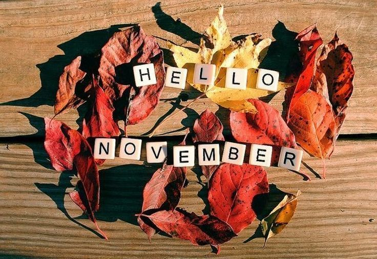 Hello November Background Images #hellonovember #november2018 #novemberimages - Hello Novembe... #hellonovembermonth Hello November Background Images #hellonovember #november2018 #novemberimages - Hello November , #Background #hellonovember #images #November #november2018 #novemberimages #hellonovember Hello November Background Images #hellonovember #november2018 #novemberimages - Hello Novembe... #hellonovembermonth Hello November Background Images #hellonovember #november2018 #novemberimages