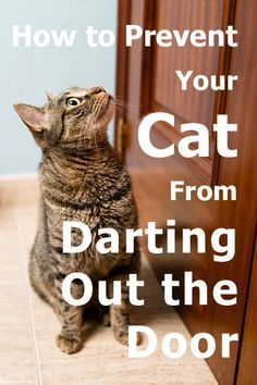 How to prevent your cat from darting out the door Article by TheCatSite.com #TCS #TheCatSite #cat #cats #kitten #kittens #prevent #door #escape #catescape