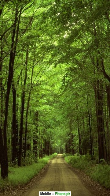 forest road picture