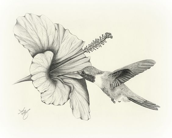 Amazing pencil drawings flowers drawing sketch art wildlife bird hummingbird flower hibiscus pencil