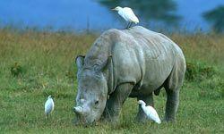 Unbelievable experience in Kenya and its wildlife. Love being on safaris!! www.sunworld-safari.com
