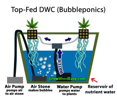 Growing Cannabis With Top Fed Dwc Bubble Cloud Or Bubbleponics
