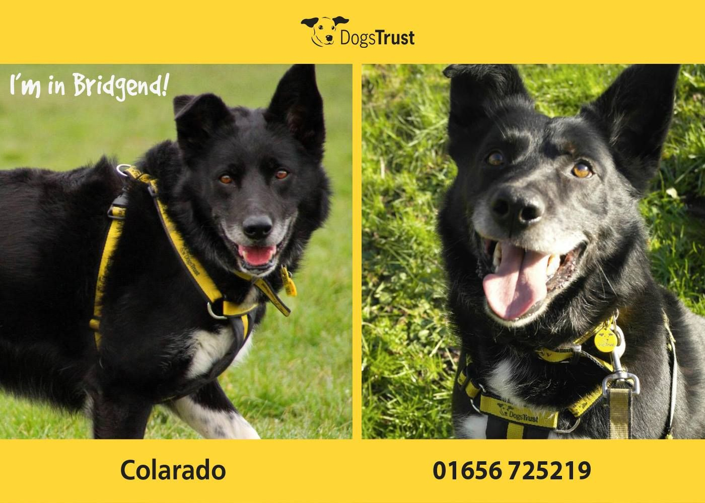 Colarado At Dogs Trust Bridgend Is A Big Lad Full Of Fun He Loves His Toys And He Would Like A Big Box Full Of Toys In His New Home