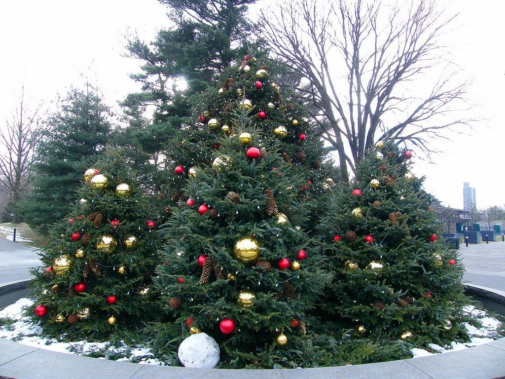 christmas tree - What To Do With Old Christmas Trees