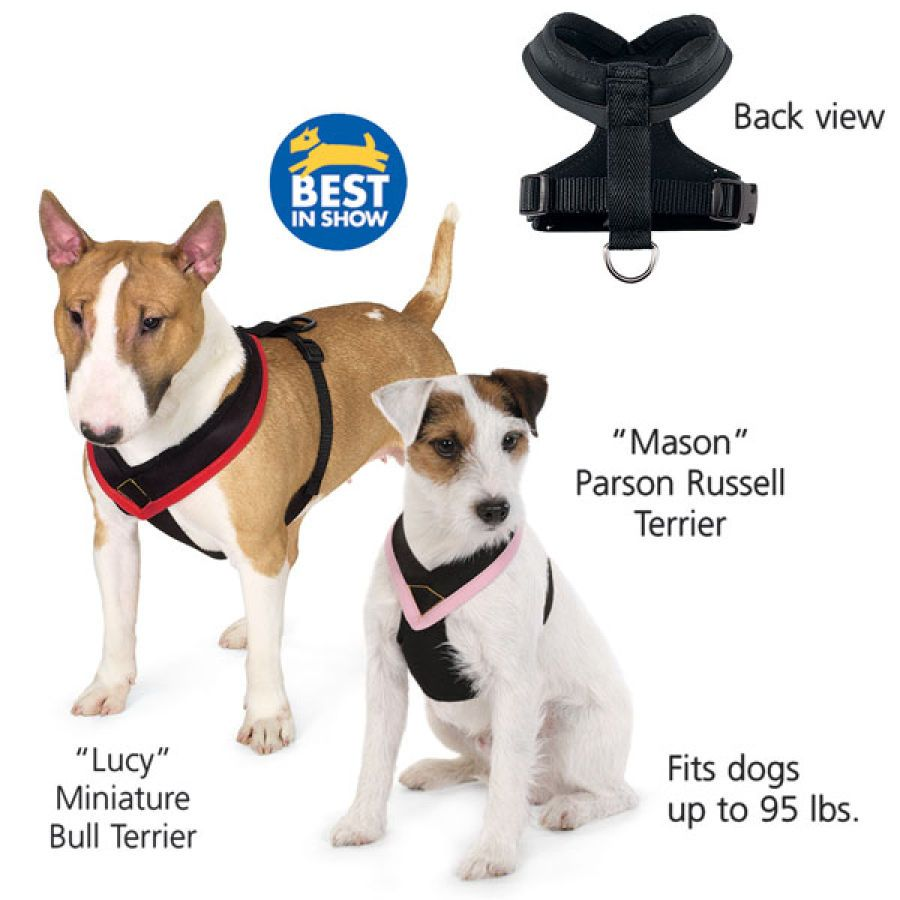 Comfort Fit Pet Harness Dogs Dog Harness
