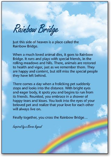 picture about Poem Rainbow Bridge Printable known as Rainbow Bridge Playing cards toward Print Rainbow Bridge Include