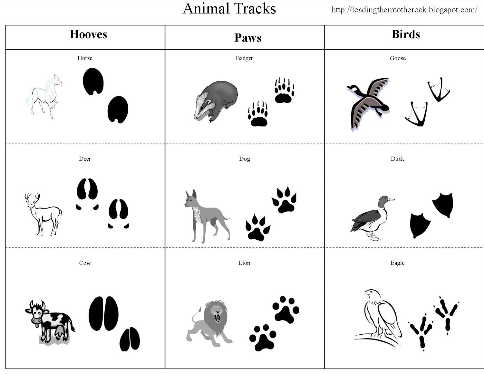 Animal Study Animal Tracks With Images