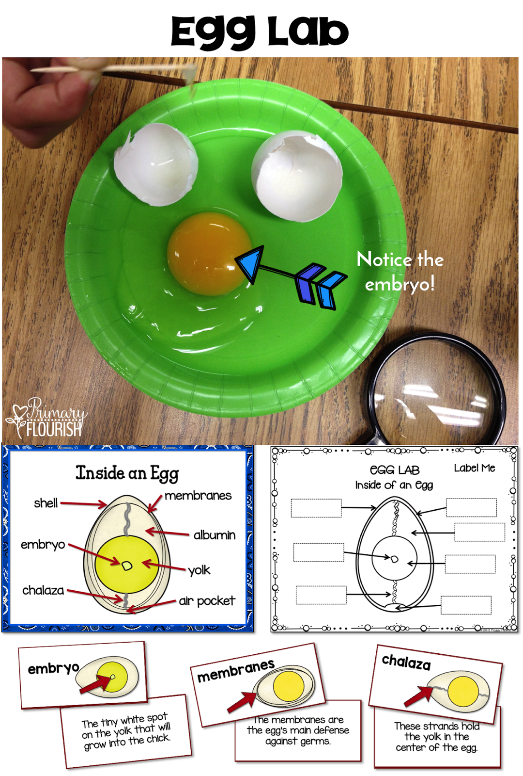 How To Hatch Chicks In The Classroom 101
