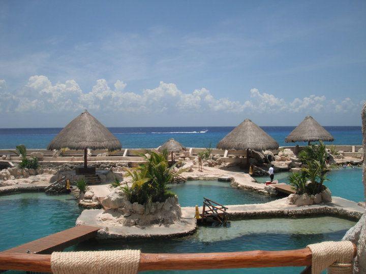 Dolphin swim in cozumel mexico dream vacations