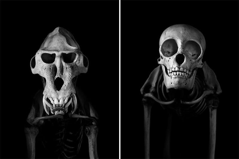 Evolution: A Stunning Monochromatic Exploration of Vertebrate Skeletons by Patrick Gries bones black and white anatomy