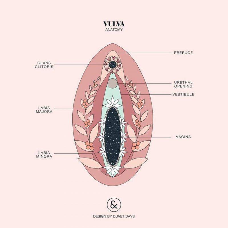 La belleza de la anotomía femenina en estas ilustraciones | Into the ...