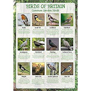 Birds Of Britain Poster Common Garden Birds Paper 400 x 300