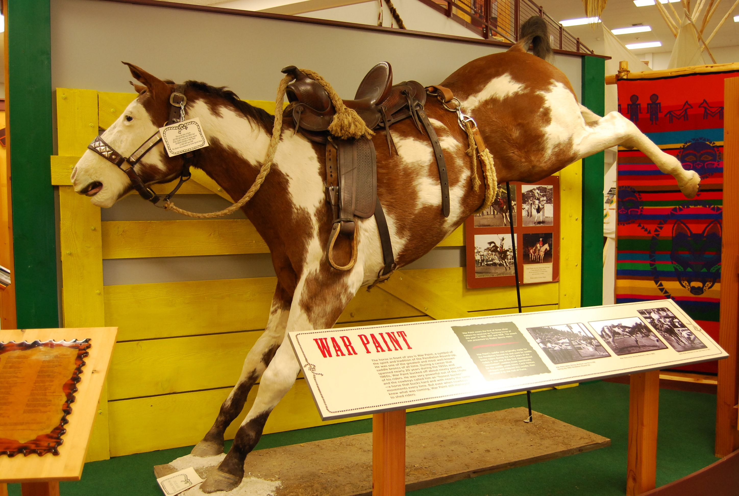 Legendary Bucking Horse now bucks on in the Pendleton Round-Up Hall of  Fame. Jim Bothum was last cowboy to spur him out of the chute. That's his  buck rein.