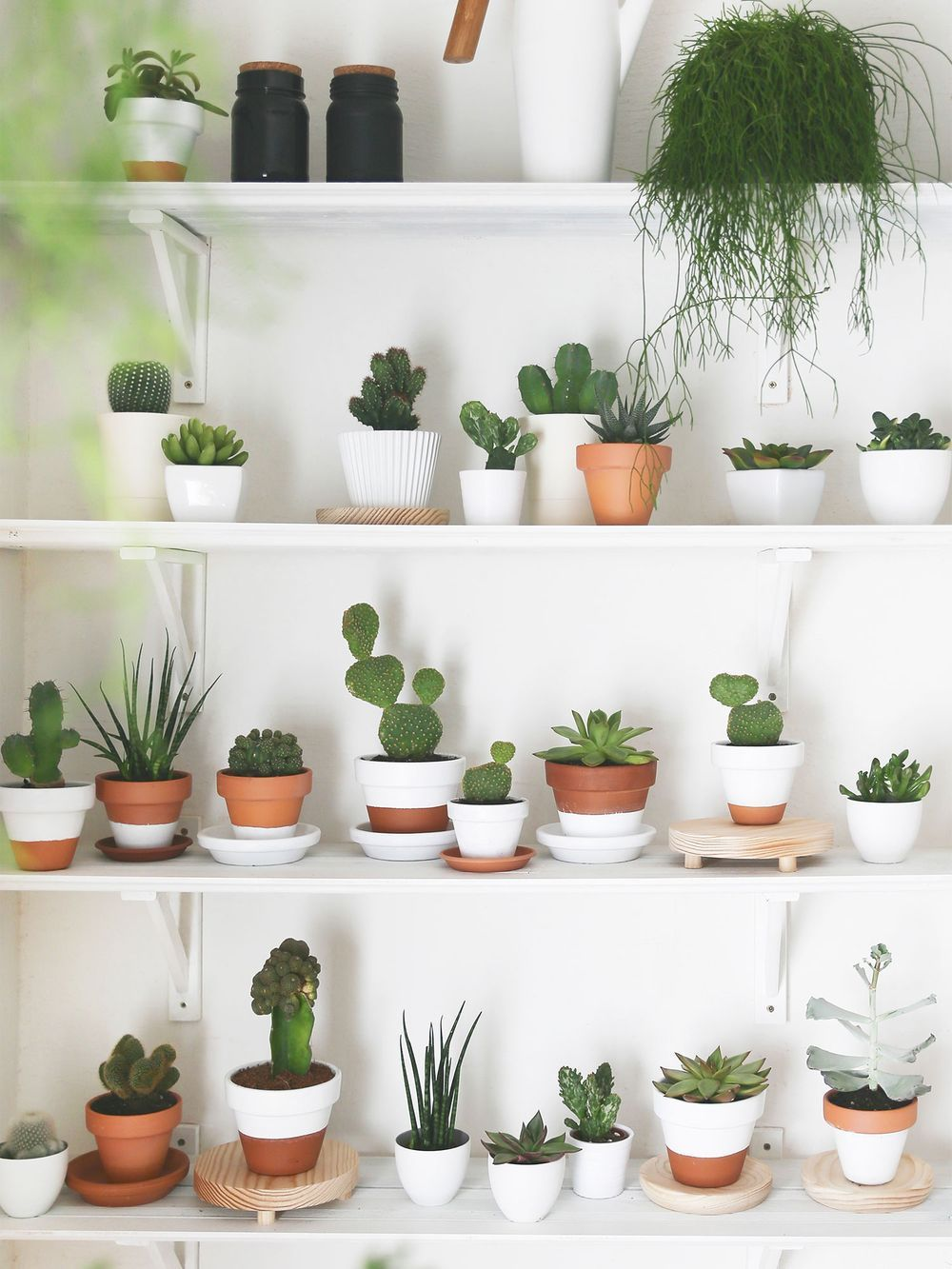 How to Style Cactus in the Home