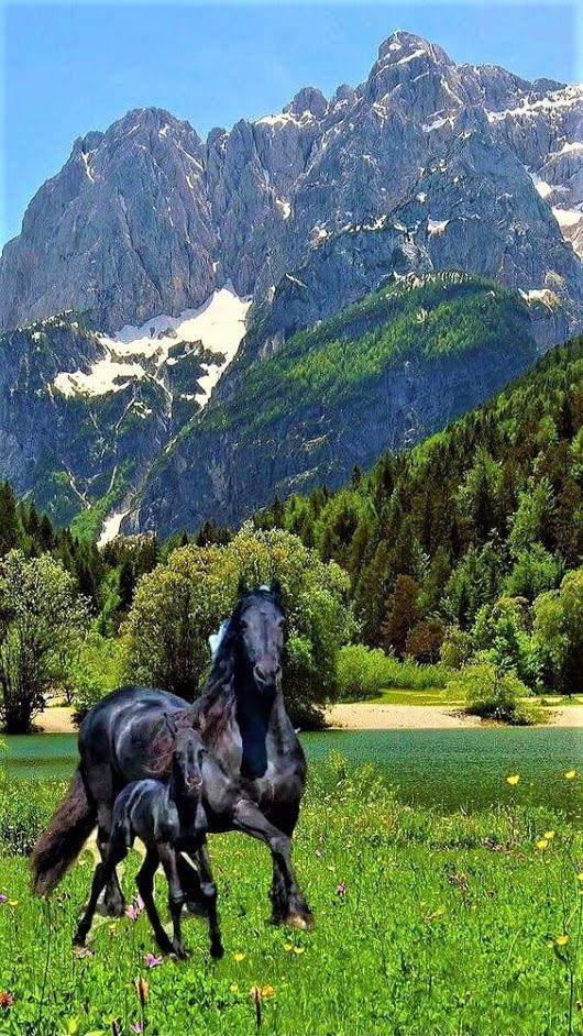 Pin by Linda & Jim Husband/Wife T on Horses! Beautiful