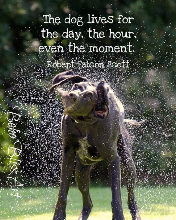 The Dog Lives For The Day The Hour Even The Moment Dog Quote