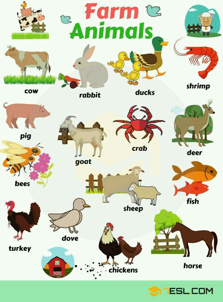 Pin by Sangita bhaina on animal Animals name with