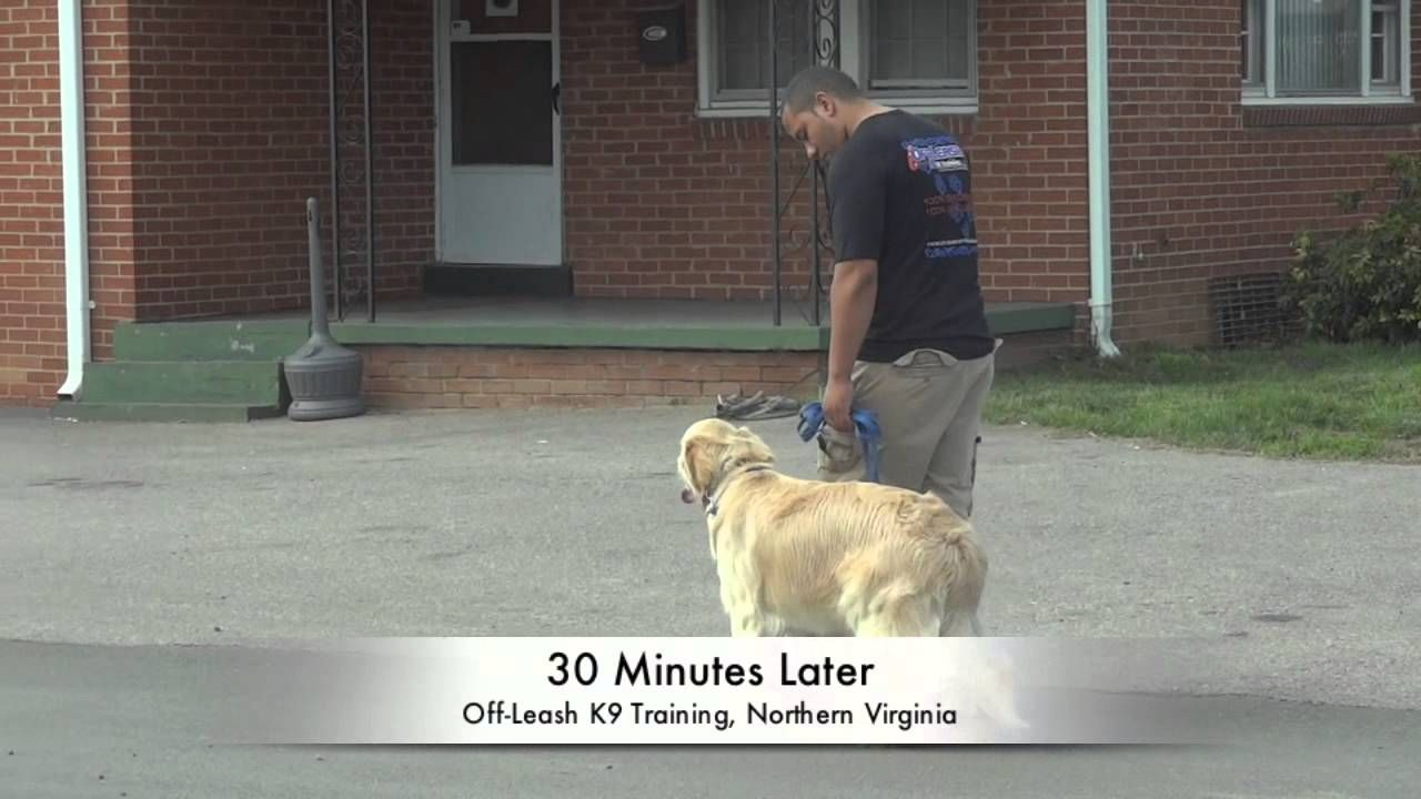 Dog Training Washington Dc For The Best Dog Trainer In