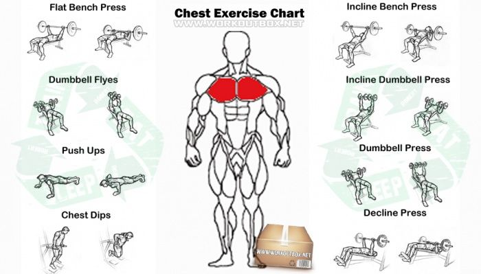 Chest Exercise Chart Best Fitness Workout Arms Abs Body Fit Ab