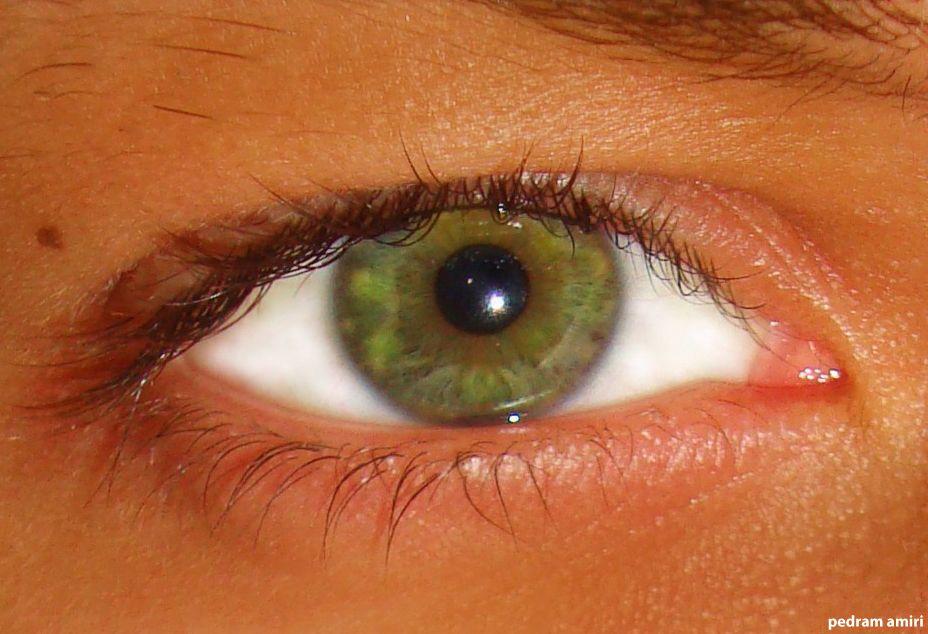 Shades Of Green Eye Color Chart Heartpulsar