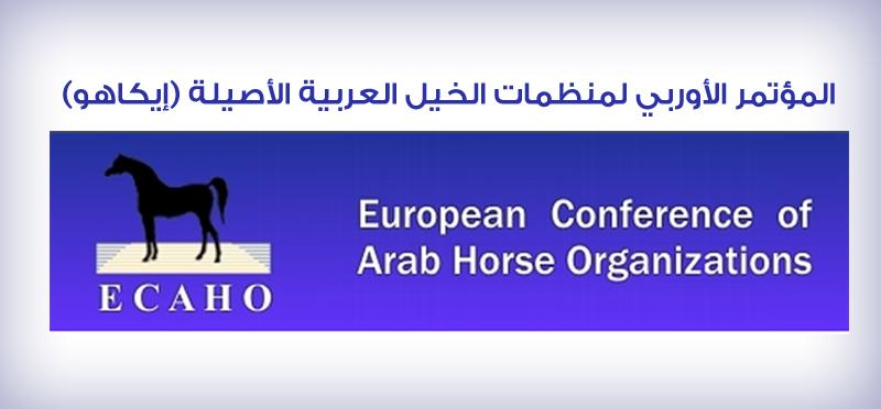 بطولة ايلرن الدولية تخالف أنظمة الإيكاهو في التحكيم Arabian Horse Horses