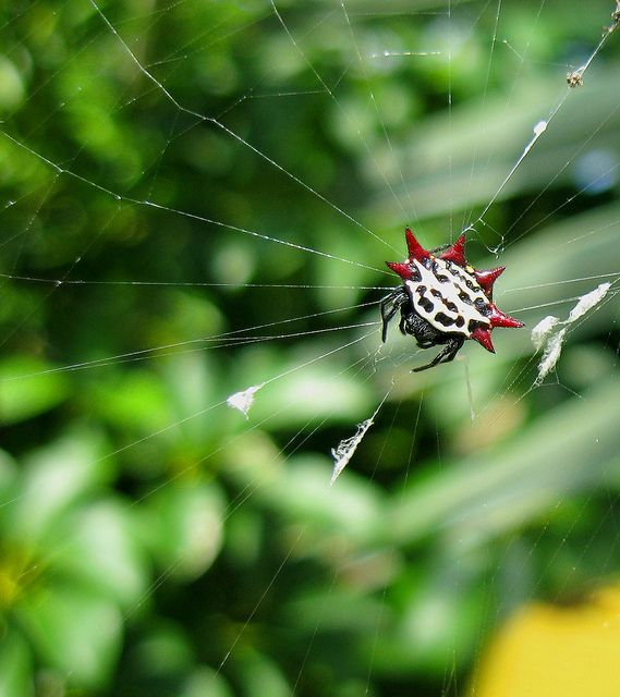 Saw This Spider In Florida....weird And Interesting
