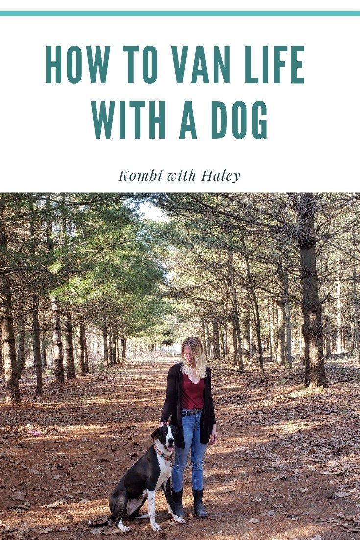 Photo of How to Van Life With a Great Dane (or any dog)- Kombi with Haley