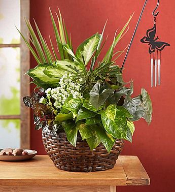 Butterfly Chime Dish Garden In 2020 Dish Garden Mixed Flower Pots Plant Decor