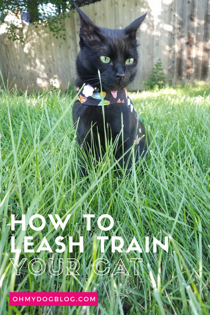 Train Your Cat To Walk On A Leash Outdoor Safety For Indoor Cats Cat Training Indoor Cat Cat Training Tricks