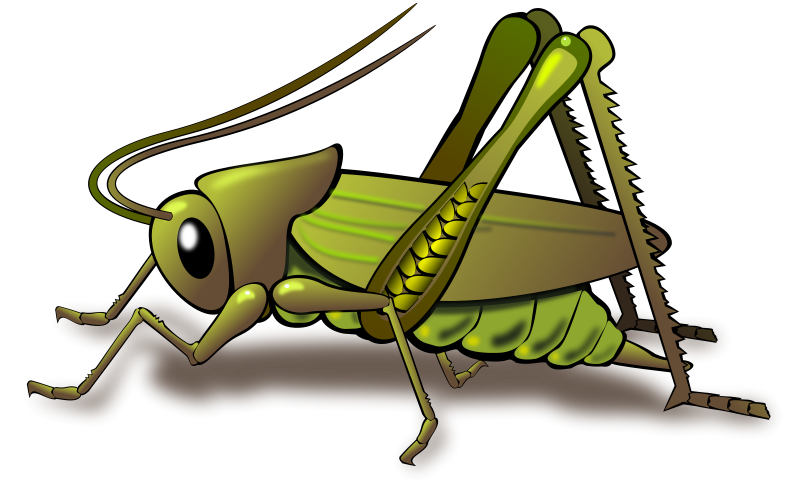 Images Of Crickets Google Search Cricket Insect Insect Clipart Insects